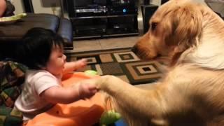 ずっとそばにいるから大丈夫。赤子の手をぎゅっと握るやさしきゴールデンレトリバー