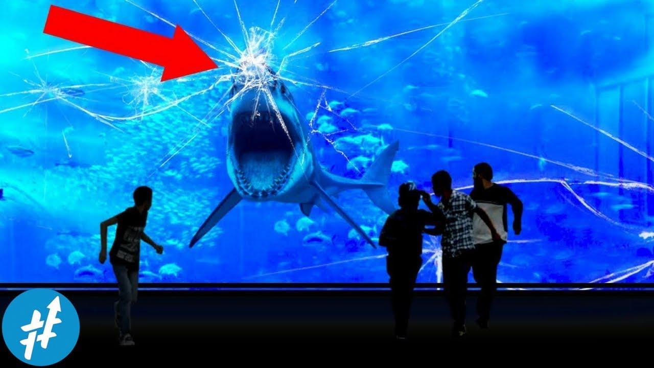 Download 61 Gambar Ikan Hiu Putih Raksasa HD Terbaru