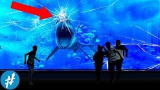 4 Alasan Kenapa HIU PUTIH Nggak Pernah Ada Di Akuarium