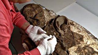 Археологи Тайваня нашли древнюю окаменелость матери с ребёнком (новости)