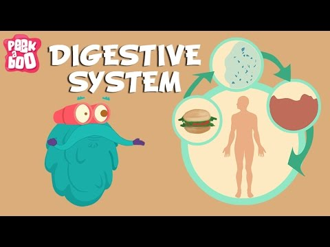 Digestive System | The Dr. Binocs Show | Learn Videos For Kids