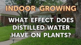 What Effect Does Distilled Water Have on Plants?