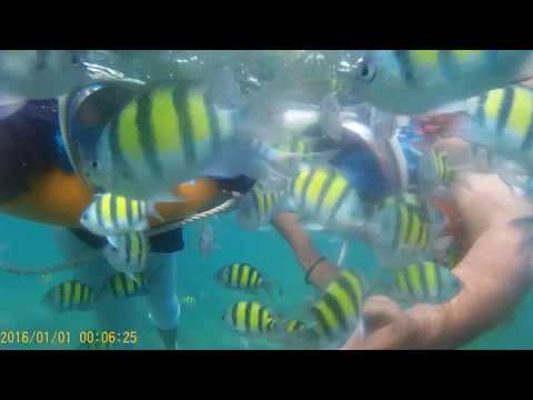 sea-fish-for-children-|snorkeling-at-elephant-beach-/andaman-nicobar-trip/snorkeling-andaman-tourism