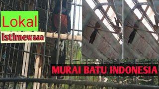 SAYA SUKA MURAI BATU BALAK 6 Limited Editions