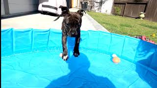 Puppy's first time in a Swimming Pool
