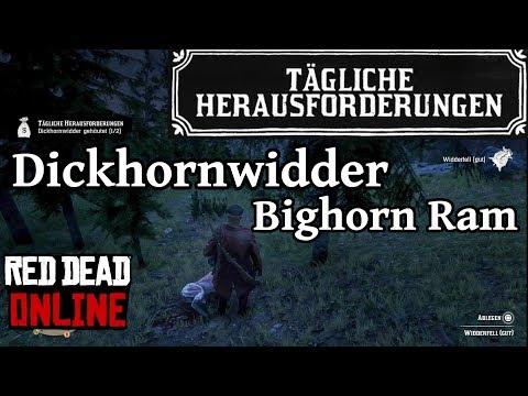 Dickhornwidder Bighorn Ram Location Red Dead Redemption 2 Online Deutsch / German thumbnail