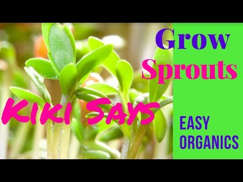 Grow Your Own Organic #Sprouts