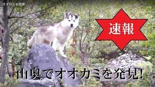 この地域では絶滅してしまったとされる伝説のオオカミを探索するため、...