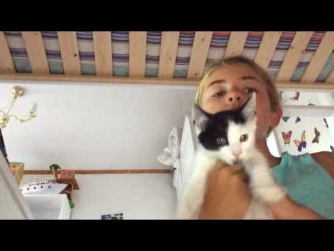 How to look after a kitten!