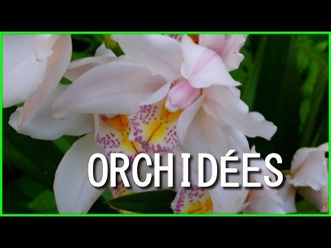 Exposition Orchidées 2016 au Parc Floral