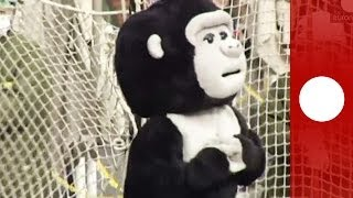 Going ape: Tokyo zoo simulates gorilla escape with disguised staff members