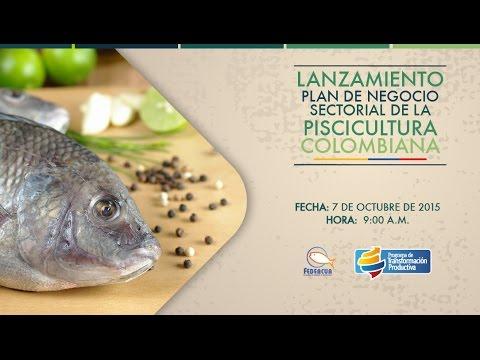 Cultivo de mojarra roja y peces de consumo sena funnydog tv for Proyecto de piscicultura mojarra roja