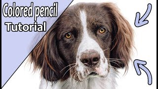 How to draw realistic BROWN FUR with colored pencil   Step by step tutorial