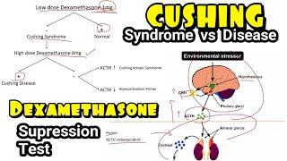 Pembahasan Soal UKMPPD Endokrin yang penting Tirotoksikosis, Hipertiroid, Grave's Disease, Krisis Ad.
