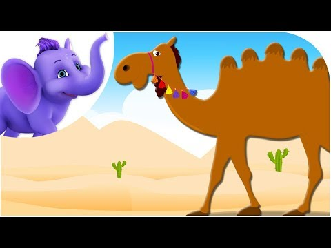 Alice The Camel - Nursery Rhyme with Karaoke