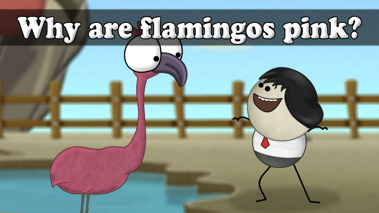 Why Are Flamingos Pink Aumsum Kids Education Science Learn
