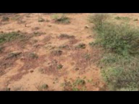 Swarms of locusts threaten Kenya food supplies
