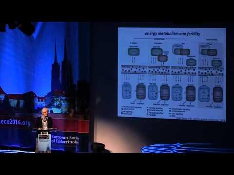 ECE 2014: Adriana Maggi. Plenary Lecture 7