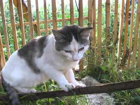 Кот говорит : НЕ ЗНАЮ!