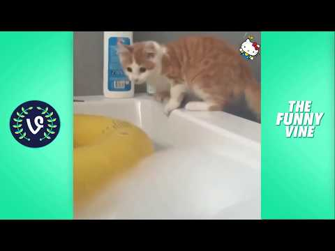 🔴 Best Cute Cats Compilation
