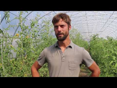 The Local Harvest | Organic Growing Stories