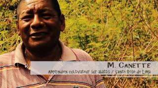 guyane pratiques d agriculture durable fertilit des sols terra preta brf 29 01