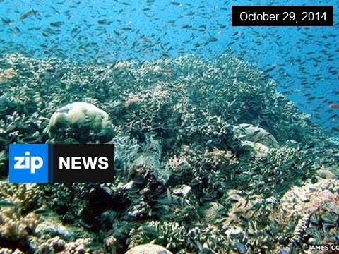 Plans Will Not Save Great Barrier Reef - Oct 29, 2014