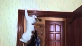 кот-человек-паук