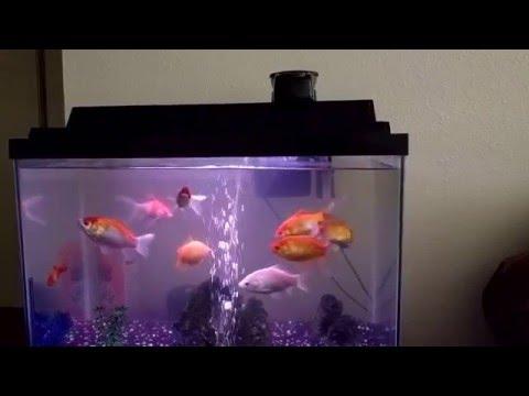 WOpet Automatic Fish Food Feeder