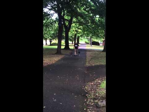 Pitbull and Coonhound Off Leash Heel Best Dog Training in Portland Oregon