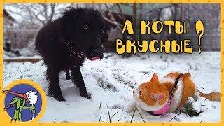 рыжик гаффи и ночка гуляют по первому снегу