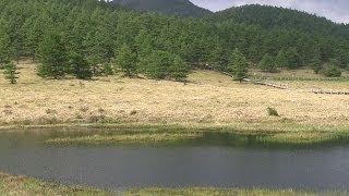 湯の丸高原池の平湿原 2014/06/20