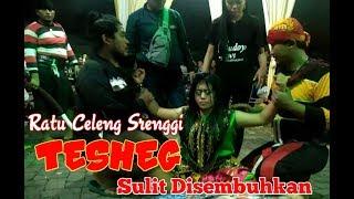 Gambar cover Gambuhe Celeng Srenggi  VIVIN TESHEG