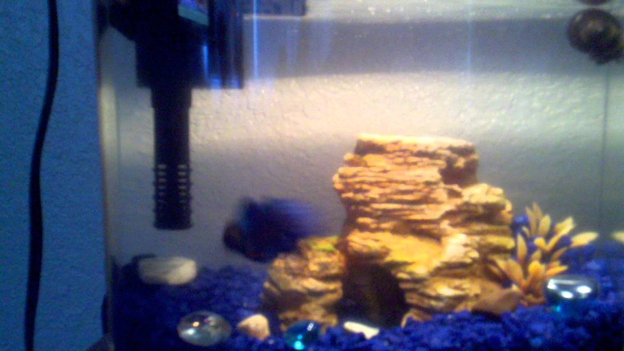 Freshwater aquarium fish have white spots - Is My Fish Sick He Has A White Spot On His Head