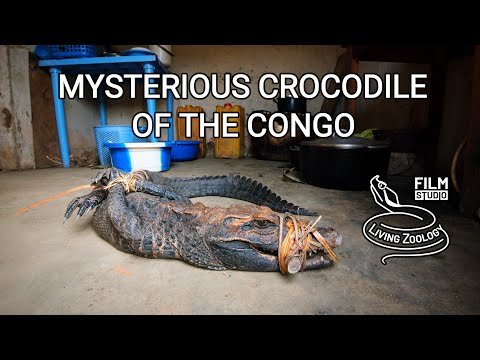 Mysterious crocodile of the Congo (English herpetology documentary film)