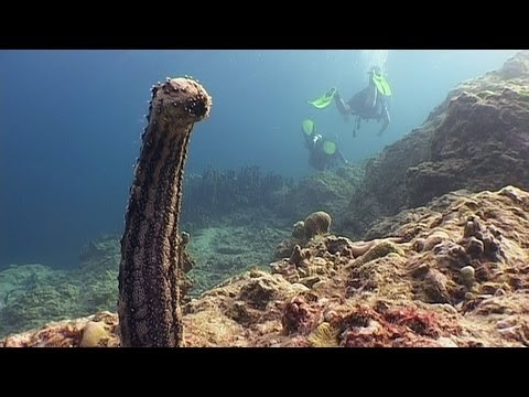 Sex on the Reef - Reef Life of the Andaman - Part 24