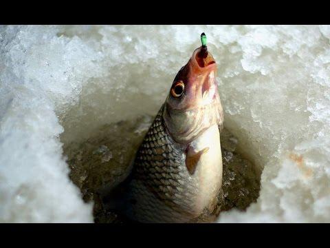 прикормка на ельцов на зимней рыбалке