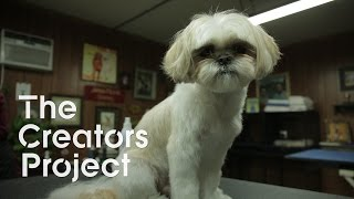 Canine Video Art , Human/Puppet Theater, and  Gritty Johannesburg | Culture Beat Episode 6