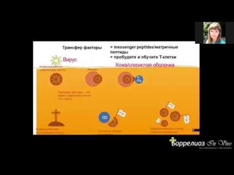 Воспаление лимфоузлов в паху: причины и лечение, фото