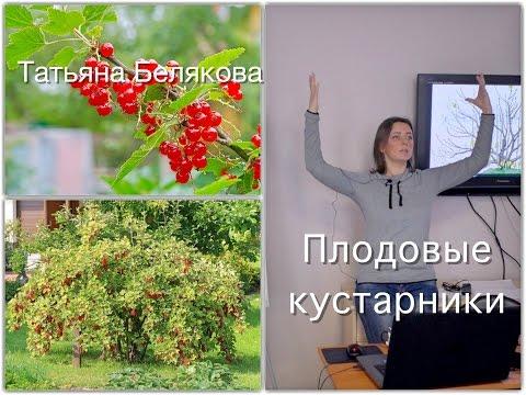 Плодовый сад . Дела огородные. Лекция - Плодовые кустарники.
