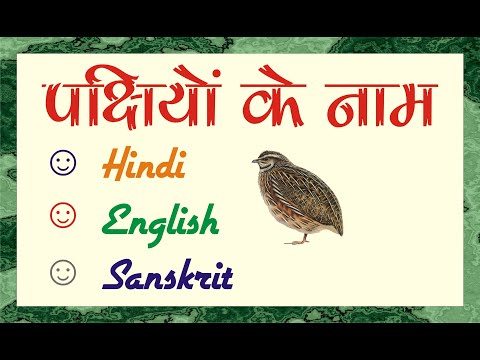पक्षियों के नाम || Birds Name || Birds Name In Hindi And English || Birds Name In Sanskrit