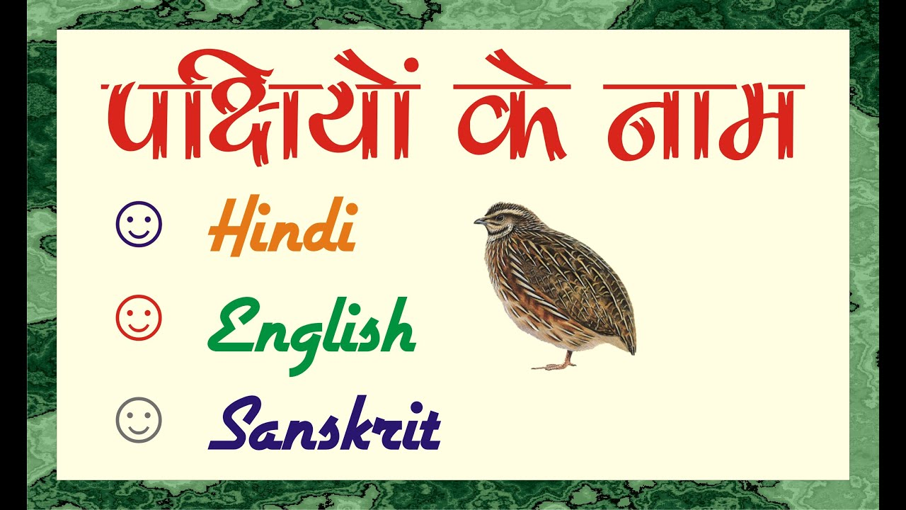 पक ष य क न म Birds Name Birds Name In Hindi And English Birds Name In Sanskrit Youtube