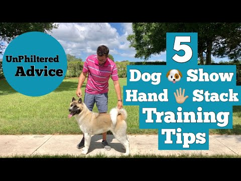 Dog Show Hand Stack Training Tips