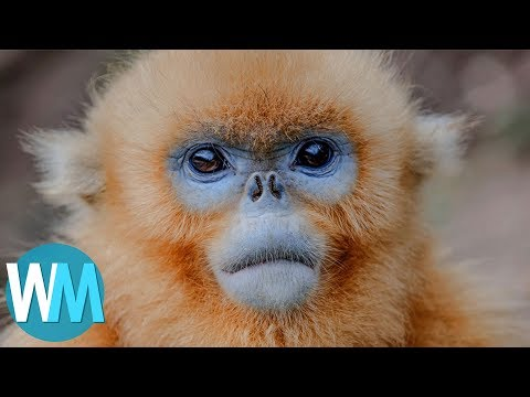 Top 10 Animals You've Never Heard Of