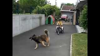 moto trike enfant  moteur sachs saxonette