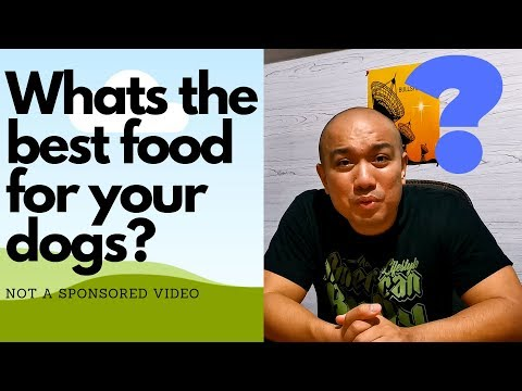 Whats The Best DOG FOOD? (Filipino)