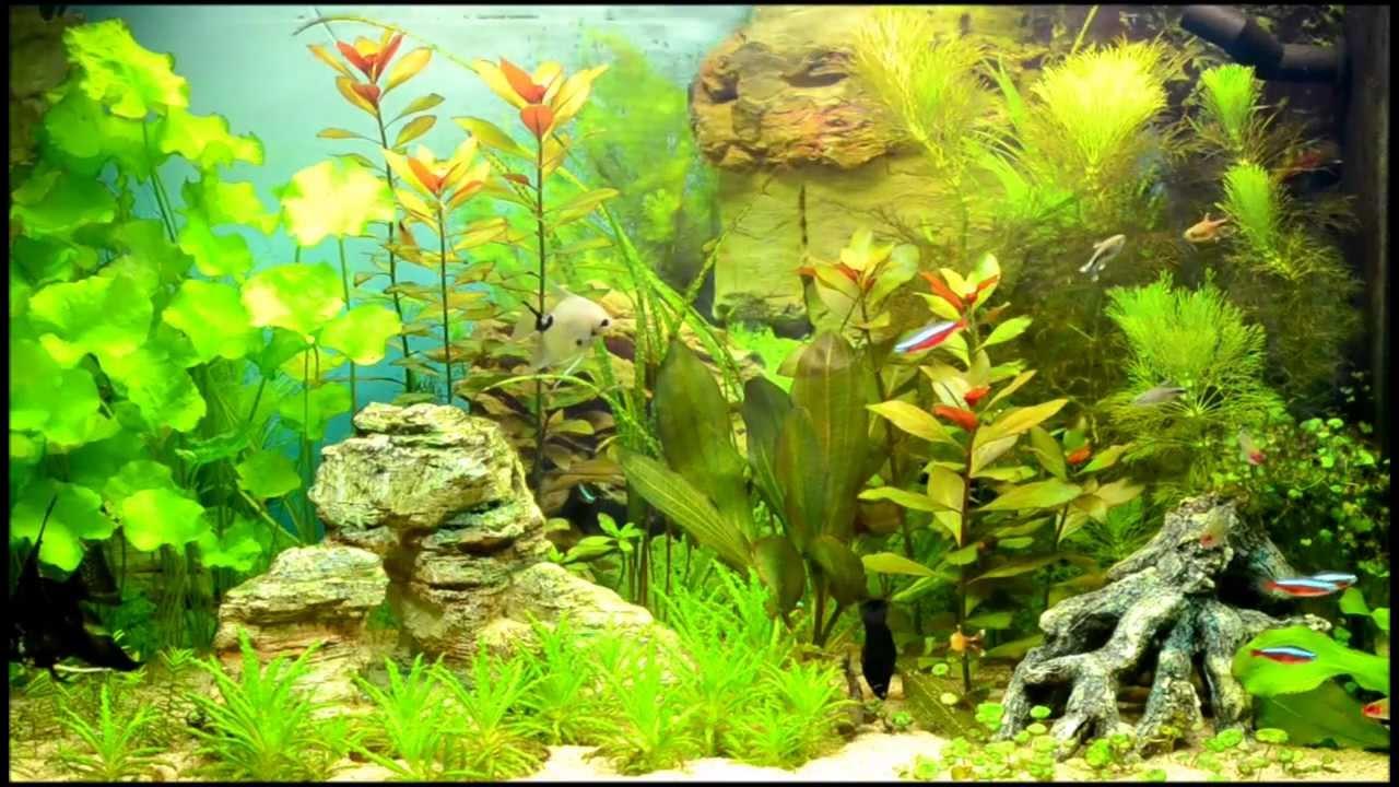 Zoetwater aquarium   YouTube