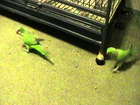Image result for pet bird messy floor