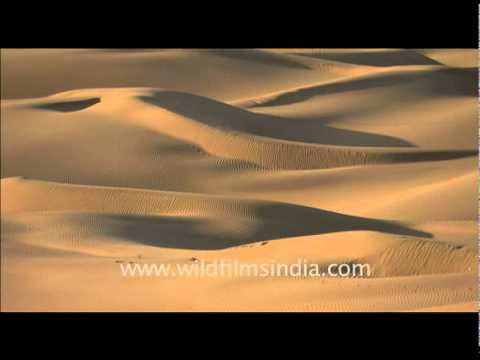 meaning of thar desert