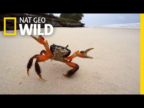 Mike's Coastline Mission | Africa's Wild Coast